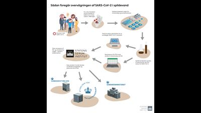 Infografik: Sådan foregår overvågning af SARS-CoV-2 i spildevand